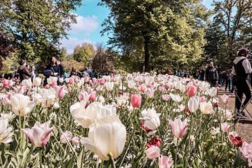 キューケンホフ公園のチューリップ畑