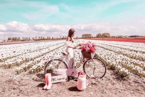 アムステルダムのチューリップ畑ならキューケンホフ公園よりFAM FLOWER FARM
